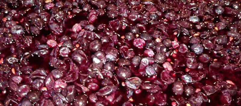 I nostri ingredienti:<br/>l'estratto antiossidante Uviox
