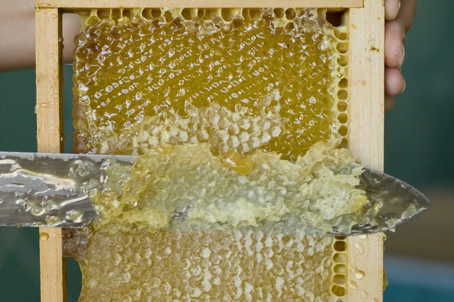 raccolta miele