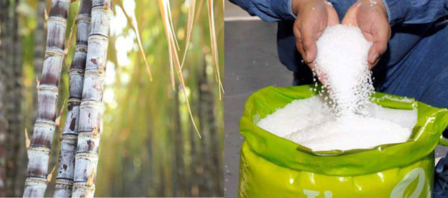 Bio-based, riciclo… Biofficina Toscana per l'ambiente!