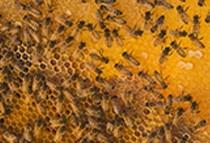 Miele millefiori bio