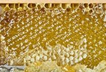 Organic beach honey